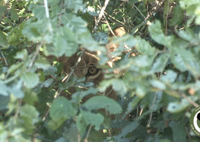 www.pro-saf.com lion
