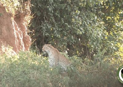 www.pro-saf.com leopard