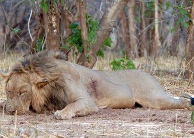 www.prosaf.com lion